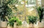 Система автополива для комнатных растений своими руками