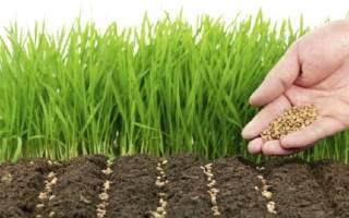 Чем засадить участок от сорняка