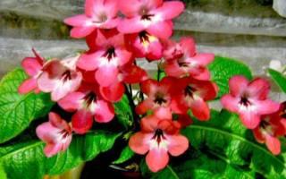 Почему в квартире не растут комнатные цветы