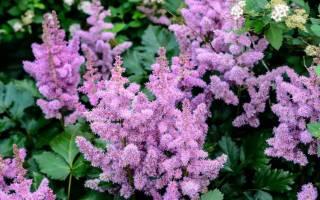 Какие цветы садить осенью многолетники