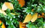 Как сажать самшит осенью