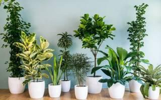 Комнатные растения неприхотливые к свету