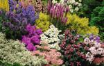 Цветы для дачи цветущие весь летний сезон