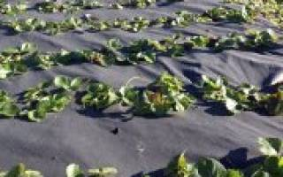 Огород без полива и прополки