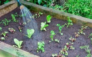 Совместимость посадки овощей на грядке