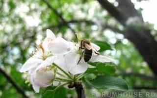 Как разводить пчел на даче