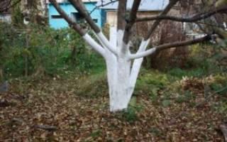 Чем побелить яблони осенью