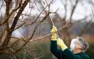 Обработка стволов плодовых деревьев осенью
