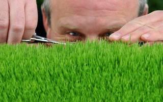 Чем косить высокую траву на даче