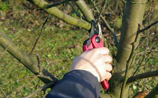 Как правильно обрезать садовые деревья