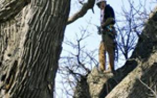 Обрезка дуба осенью