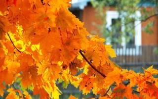 Что садить осенью на даче