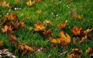 Посадка газона осенью своими руками