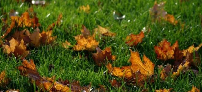 Можно ли сажать газон осенью