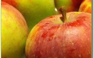 Что относится к ягодам список