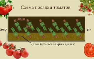 Расстояние между помидорами в теплице