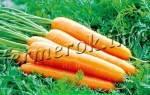 Морковь королева осени описание