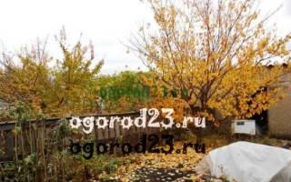 Нужно ли окапывать плодовые деревья осенью