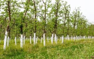 Побелка для деревьев своими руками
