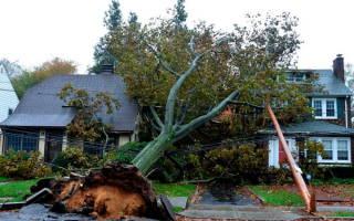 Как спилить дерево не нарушая закон