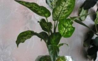 Выращивание цветов в гидрогеле
