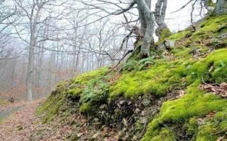 Лесной мох для комнатных растений