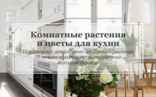 Какие цветы можно держать на кухне