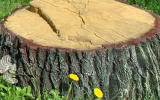 Удаление корней деревьев химическим способом