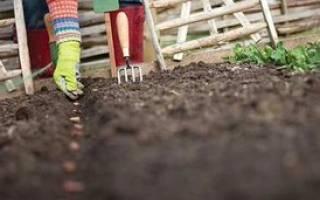Какие многолетние цветы можно посадить осенью семенами