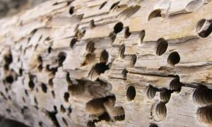 Обработка дерева от жуков короедов