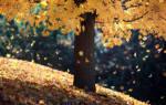 Почему происходит листопад осенью