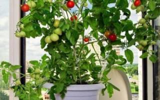 Что можно выращивать в квартире круглый год