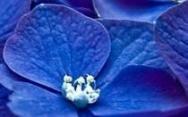 Фотиния растение посадка и уход