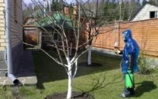 Чем опрыскивать деревья весной до распускания почек