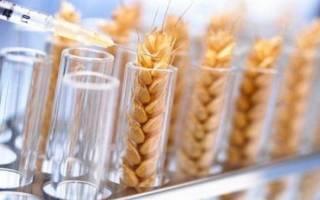 ГМО семена в России список
