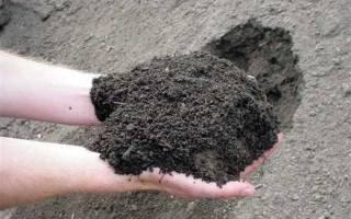 Что добавить в землю для рыхлости