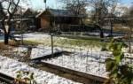 Что посадить под зиму в огороде