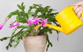 Чем поливать комнатные цветы чтобы они цвели