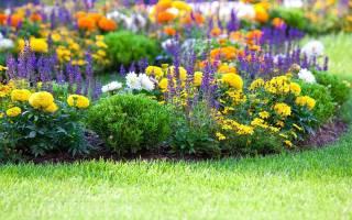 Какие цветы растут возле школы