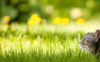 Уход за газоном ранней весной