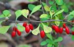 Какие ягоды посадить на даче