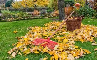 Уход за газоном осенью