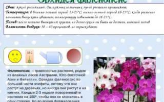 Паспорт комнатного растения орхидея