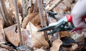 Обрезка ежемалины осенью