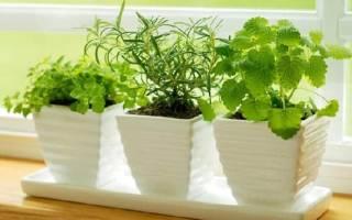 Можно ли поливать комнатные цветы сывороткой молочной
