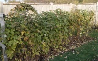 Обработка малины осенью от вредителей и болезней