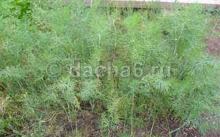 Что выгодно выращивать на огороде для продажи