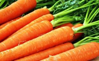 Подготовка грядки под морковь с осени