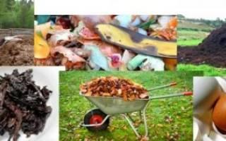 Чем кормить земляных червей в домашних условиях