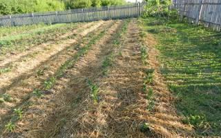 Ленивый огород для картошки